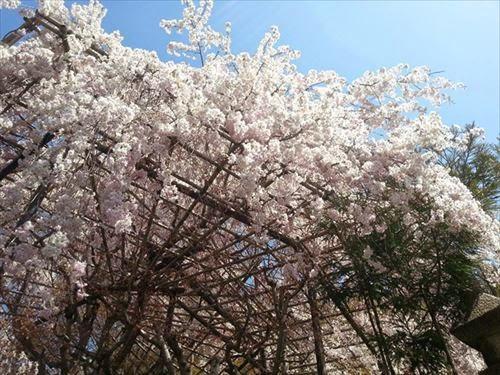 京都市西京区|天鏡院