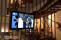 Lituenigo Museo del Labrador aperos de labranza