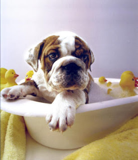 Tips And Benefits Of Dog Grooming