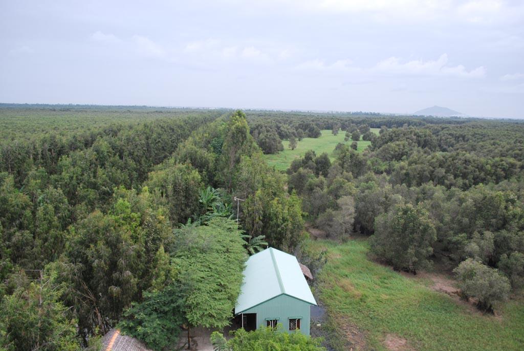 Quang cảnh Rừng Tràm Trà Sư, nhìn từ Tháp Quan Sát