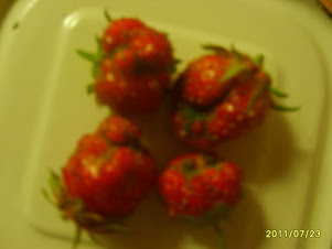 Корявые ягоды у клубники