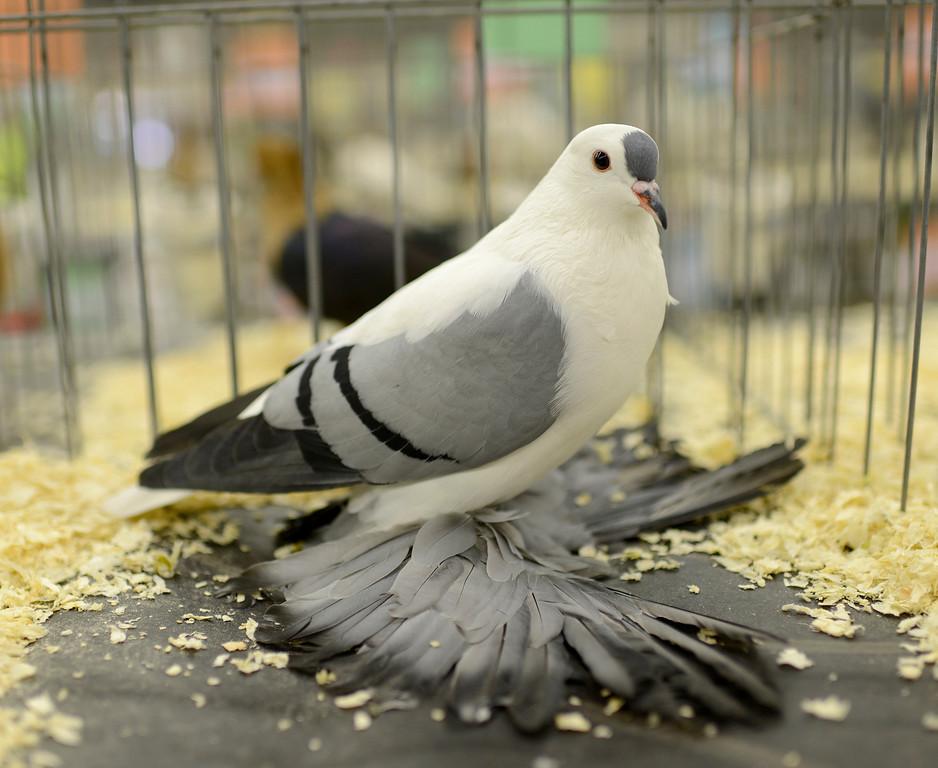 Swallow for Waimanalo feed supply