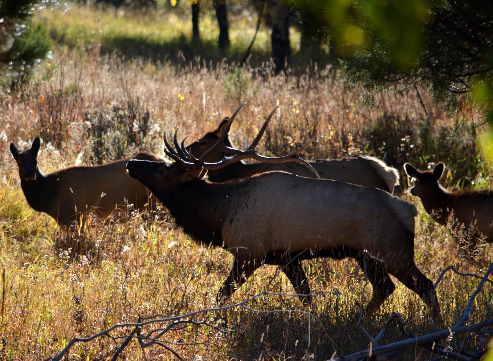 cozy birdhouse | elk at rocky mountain national park