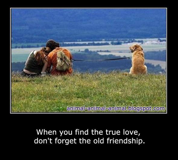 Animal love memes - photo#27
