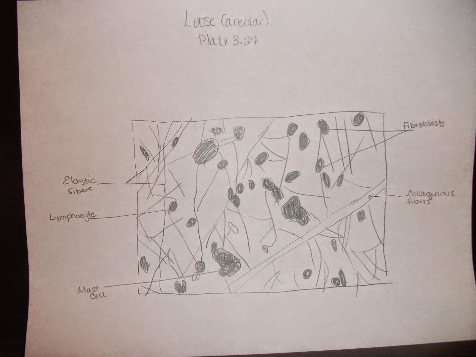 bio 156 lab report