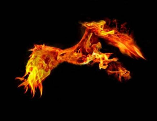 p mgico fire bird 600x462