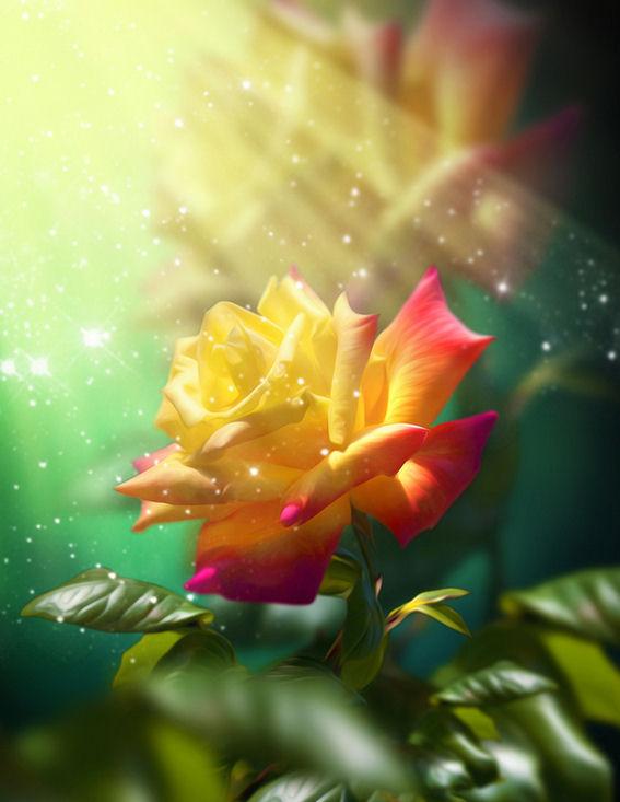 Imágenes de rosas con movimiento Imágenes de Amor - Imagenes De Rosas Hermosas Gratis