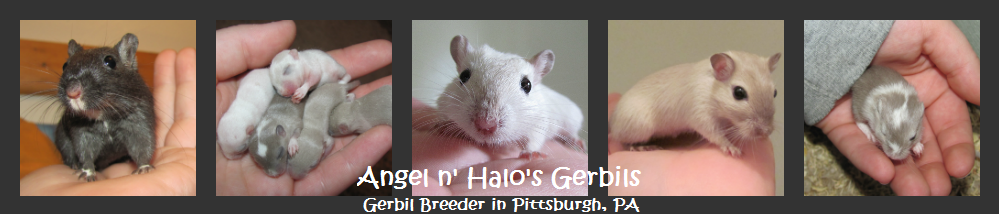 Angel n' Halo's Gerbils