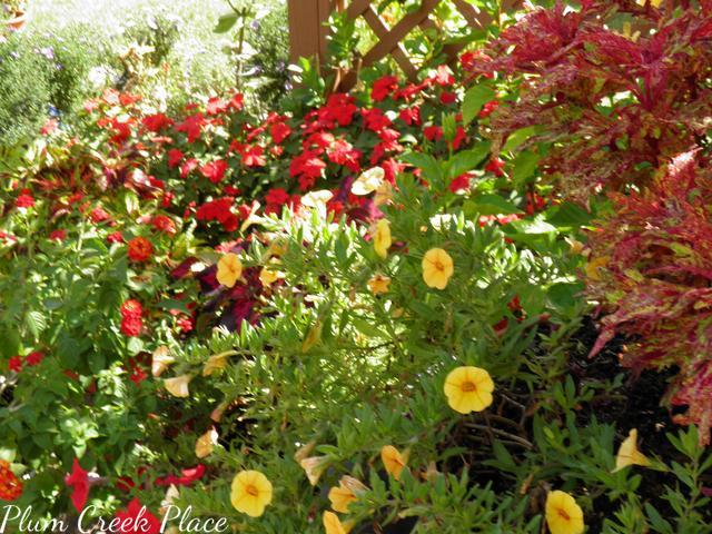 coleous, impatiens, callies, zinnia, late summer flowers, patio garden