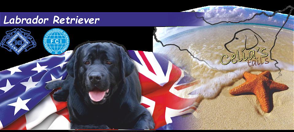 Cuccioli Labrador Sicilia - Allevamento Labrador Sicilia