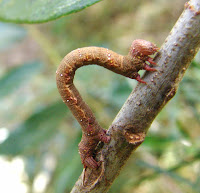 Caterpillar Picture and Photo 20