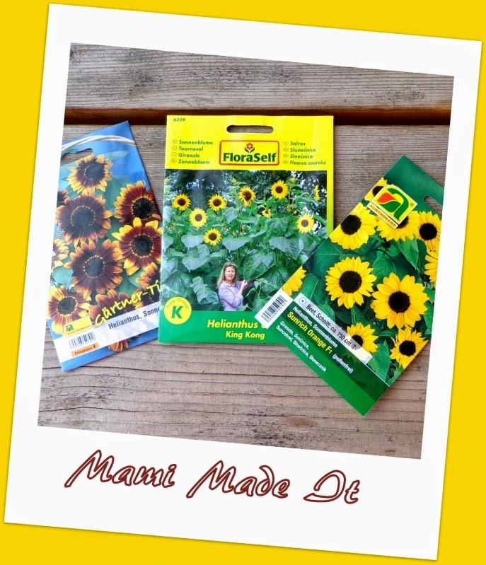 Sunflower Field - Sonnenblumenfeld