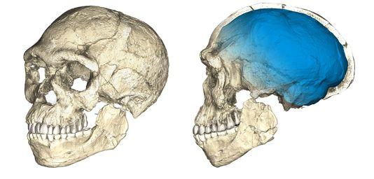 La découverte qui bouleverse l'histoire d'« Homo sapiens »