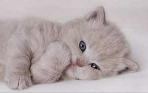 Gatito en un sueño