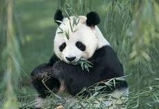 GambaR: gambar hewan herbivora dan makanannya
