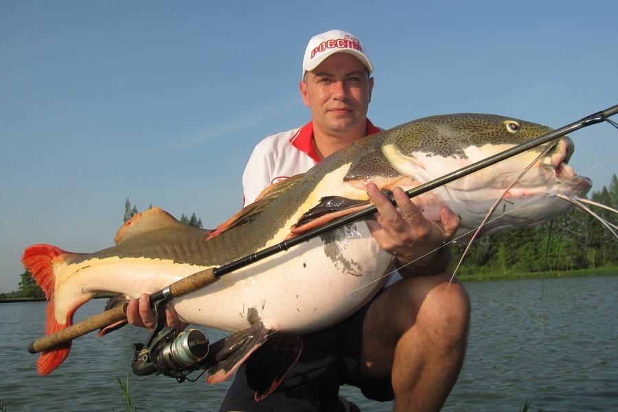 Mondo pesca news tailandia gigantesco pescegatto red tail for Grosso pesce di lago