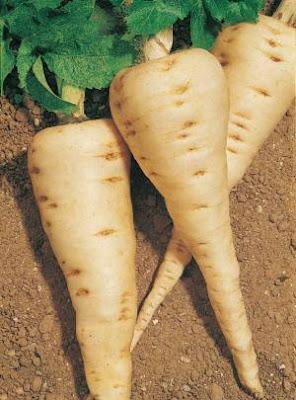 Recettes Légumes anciens-Purée de panais à la coriandre