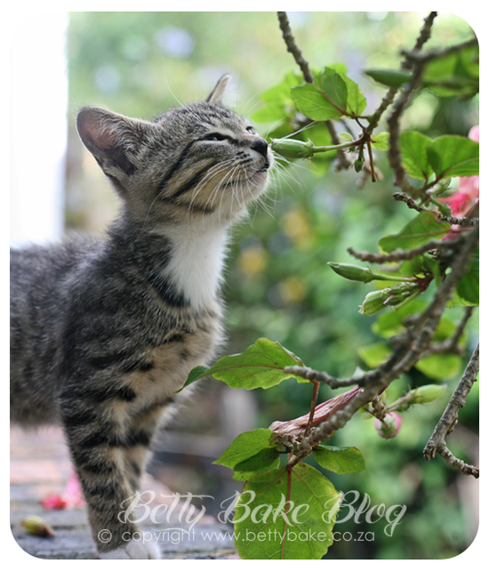 kitty, kitten, kitten smelling flower, happy 2013, life, betty bake, cape town,