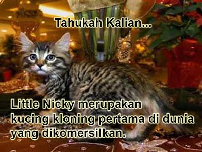 Little Nicky, kucing kloning pertama di dunia yang dikomersilkan