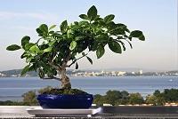 Bonsai: Cómo cuidar y cultivar en 5 pasos