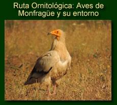 Rutas ornitológicas por Extremadura y Gredos