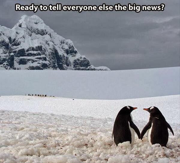 30 Funny animal captions - part 18 (30 pics), funny penguin meme, ready to tell everybody else the big news