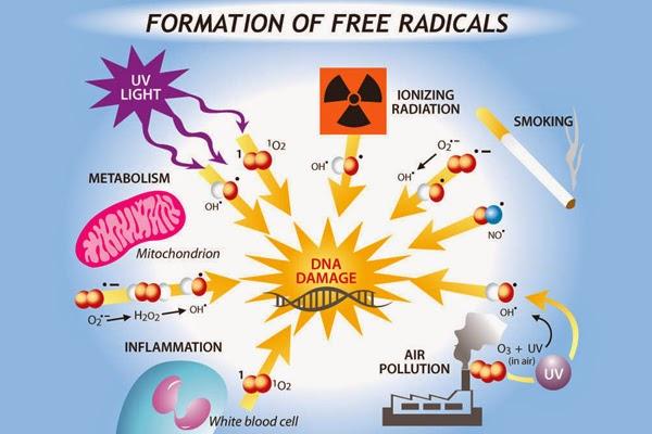 punca radikal bebas