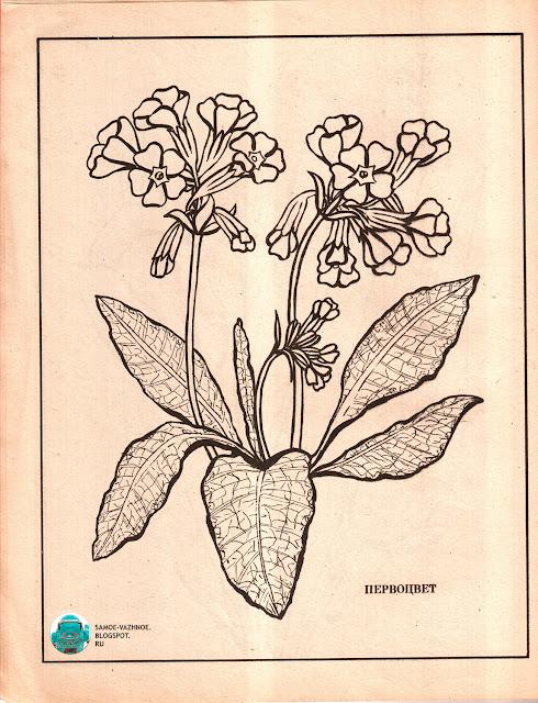 Альбом для раскрашивания СССР советская версия для печати скан распечатать скачать старая из детства