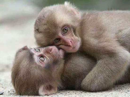 Cute Money Hug each other
