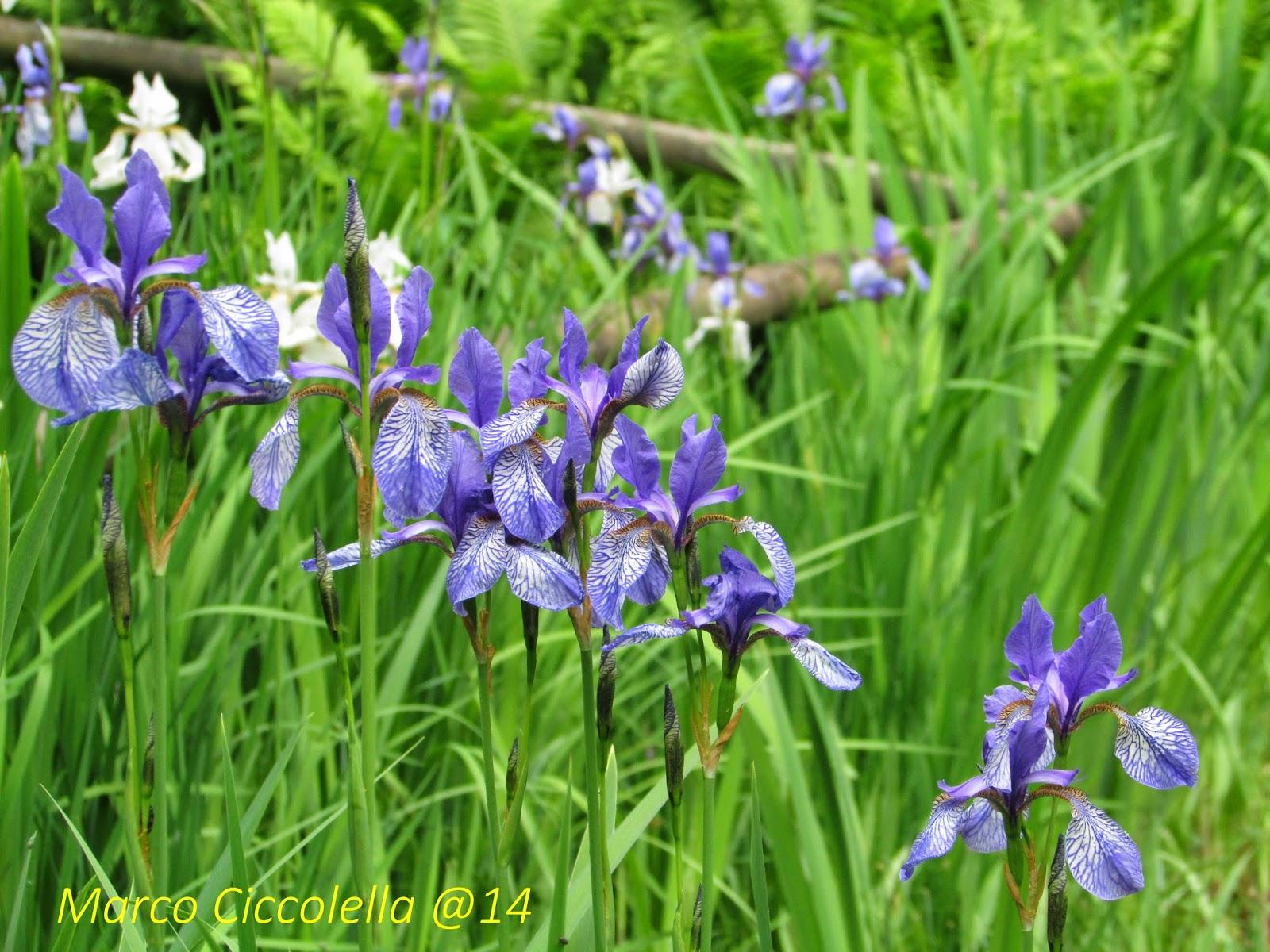 Giardino Pietra Corva : Guida naturalistica in oltrepò pavese giardino botanico alpino