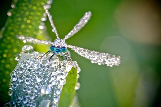 macrofotografia de insecto con gotas de rocio