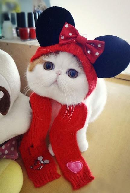 Foto-foto kucing paling imut bernama Snoopy 06