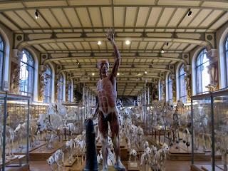 Knochenausstellung