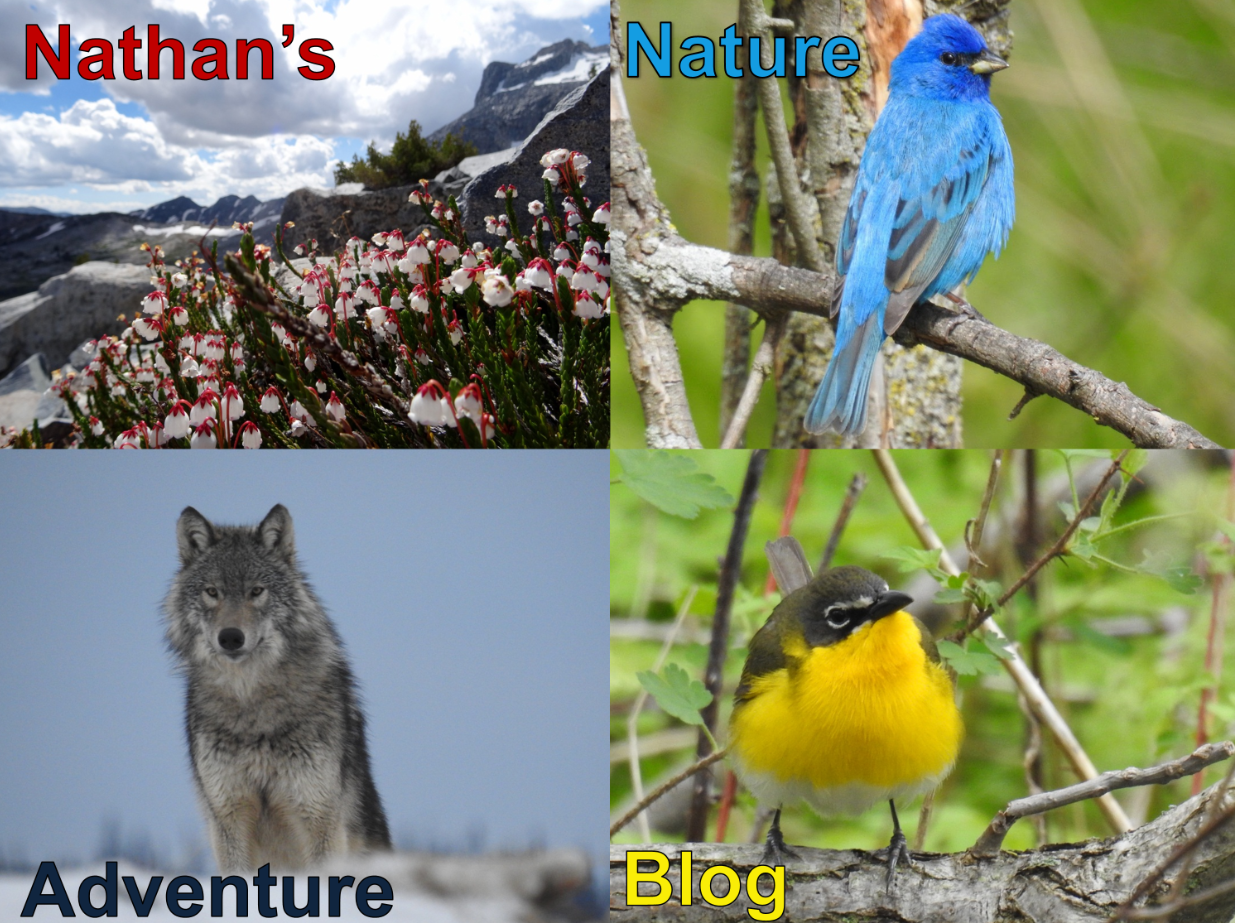 Nathan's Nature Adventure Blog