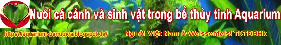 Nuôi cá cảnh và sinh vật trong bể thủy tinh_TKTDBHk