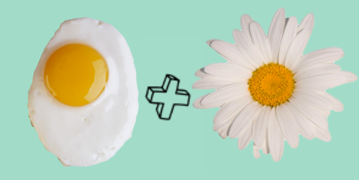 Eggs And Daisies