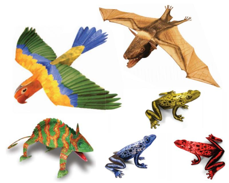 Papercraft Rainforest Animals