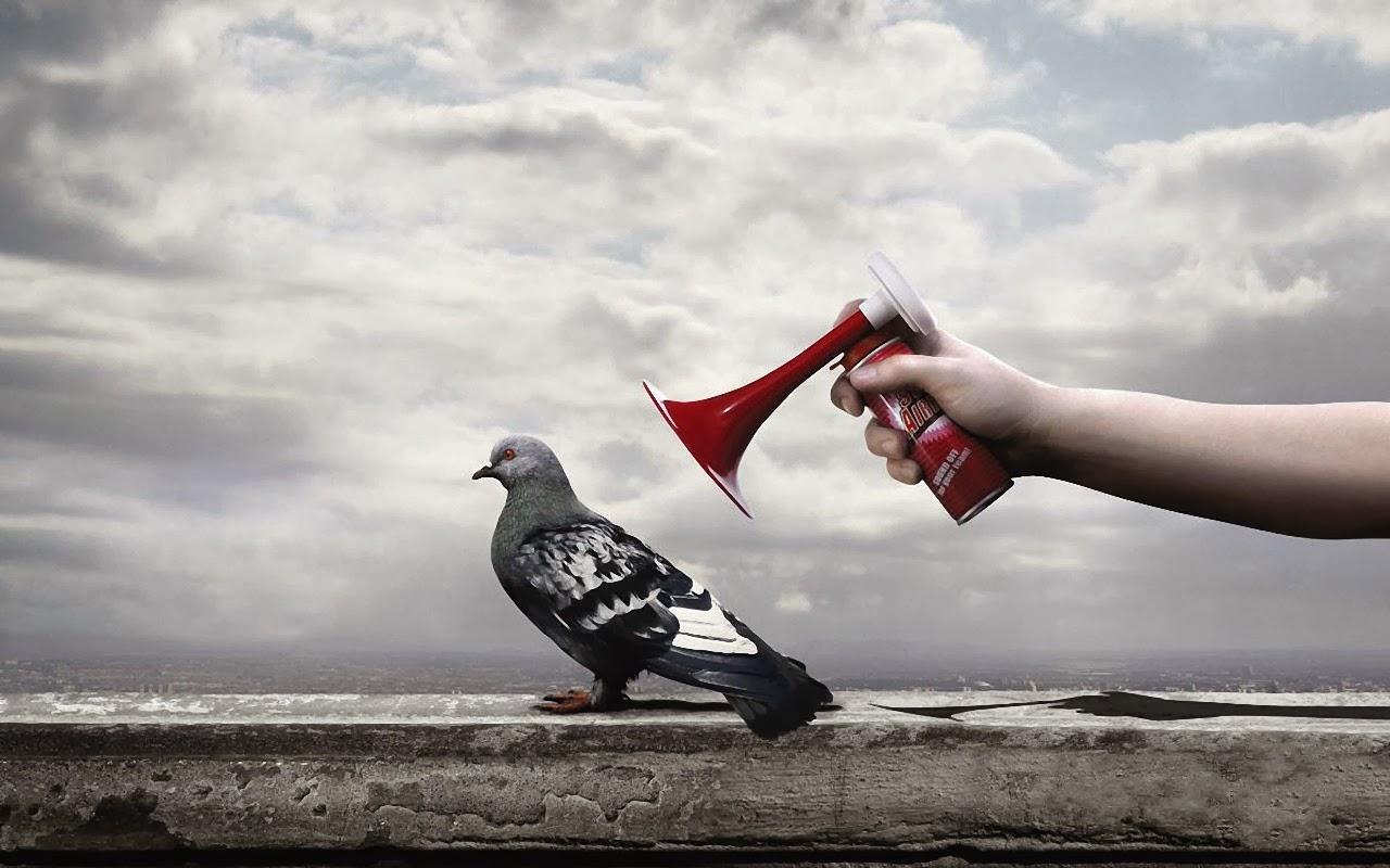 "<img src=""http://2.bp.blogspot.com/-ynhdRq7y-vs/UtujB0i0_UI/AAAAAAAAI7g/Cn_EFPORGG8/s1600/anti-bird-spray.jpg"" alt=""anti bird spray"" />"