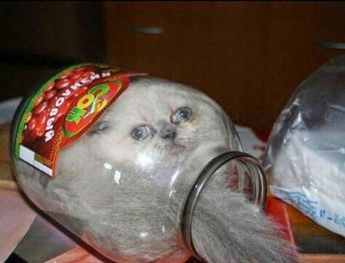 cat in a jar