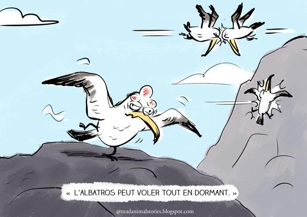 l'albatros peut voler tout en dormant