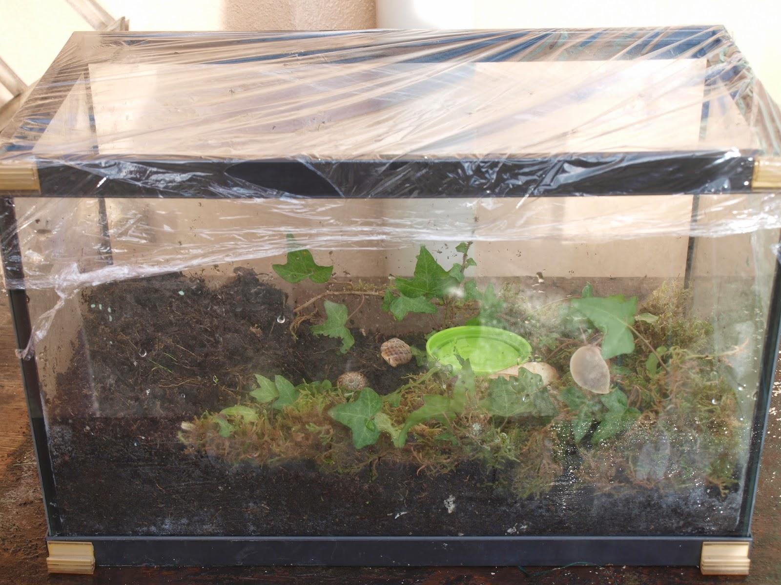 Extrêmement L'école à la maison dans notre quotidien: Elevage d'escargots IJ65