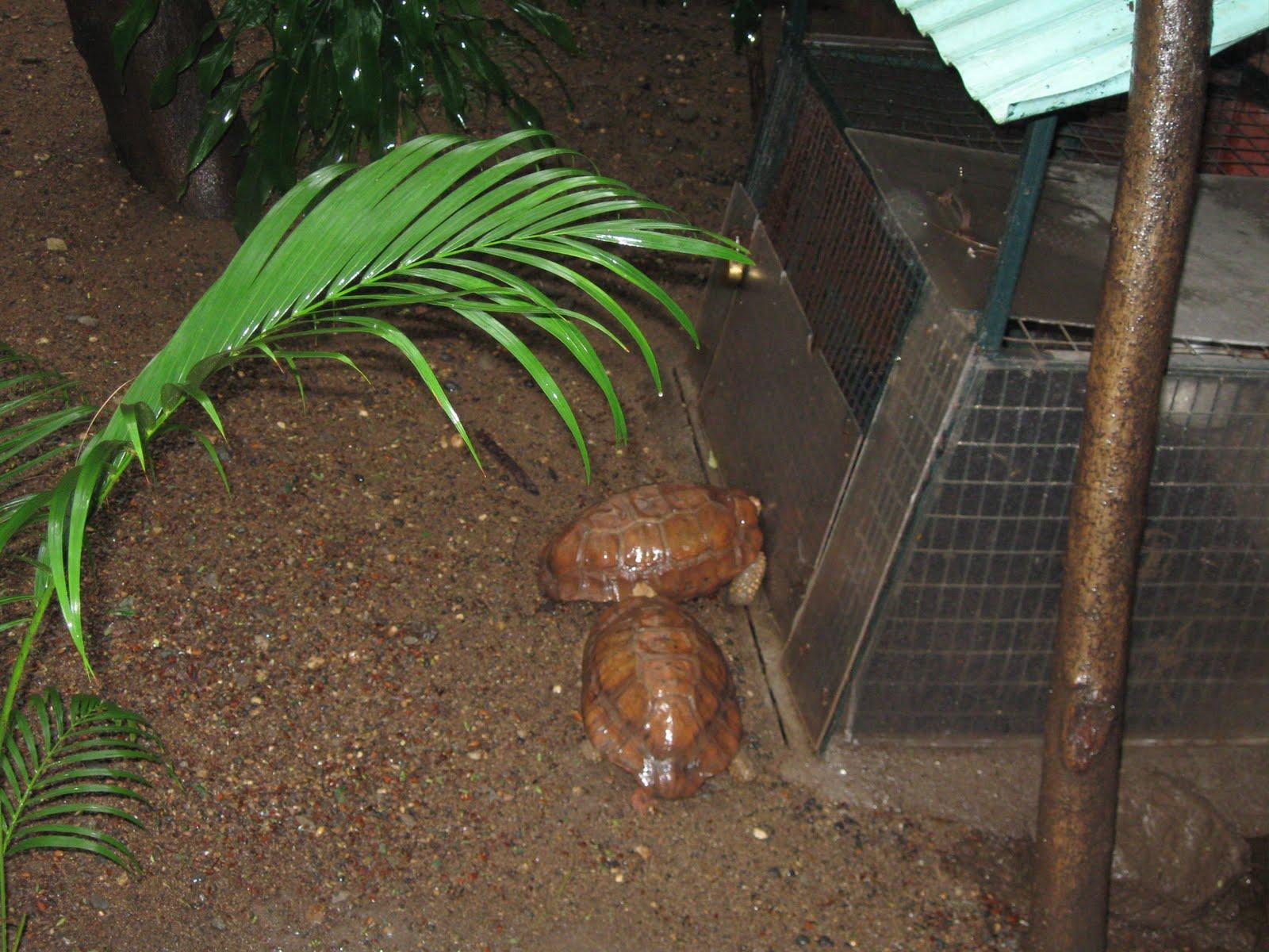 bombay zoo park
