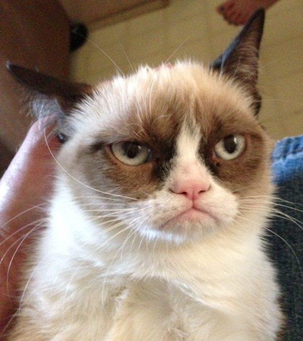 Tard the grumpy cat, I'm Tard