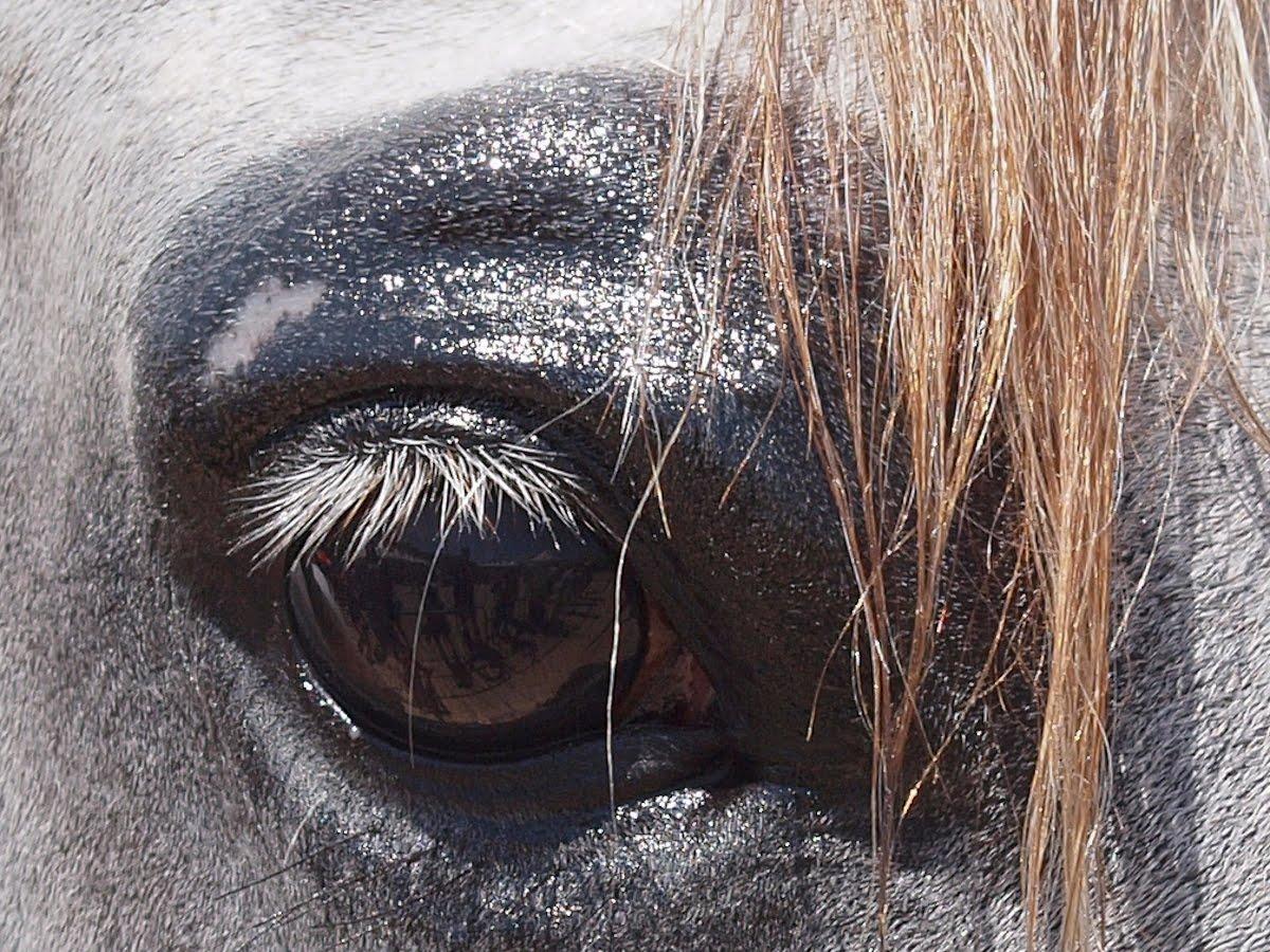 Menton Daily Photo The Arabian Horse Show Reflections