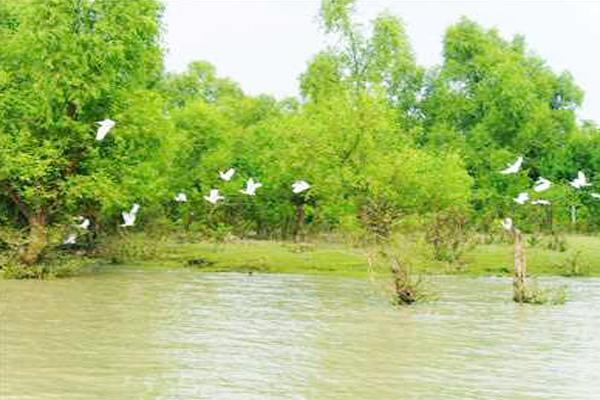 barguna, bangladesh