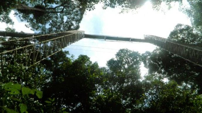 brunei canopy