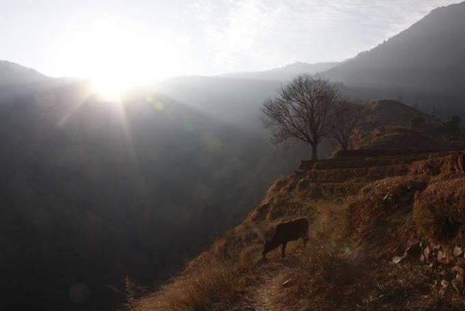 ヒマラヤと水牛