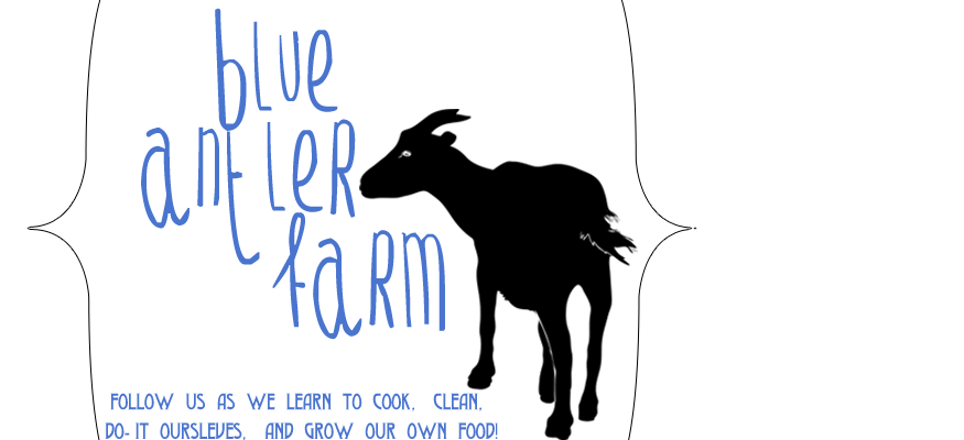 Blue Antler Farm