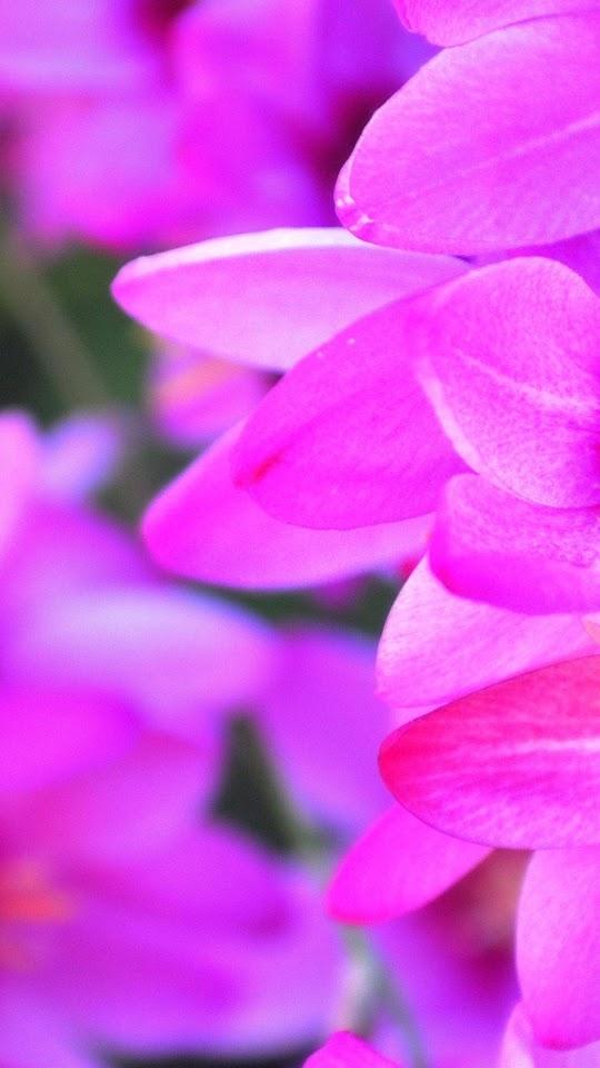 Purple Flower Petals Macro  Galaxy Note HD Wallpaper