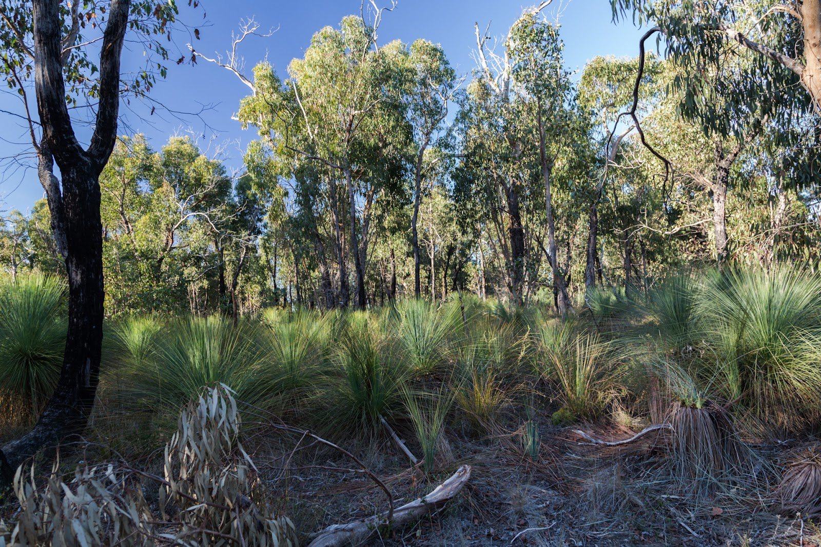 grass trees on ted errey nature circuit